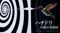 ハチドリ 究極の飛翔術