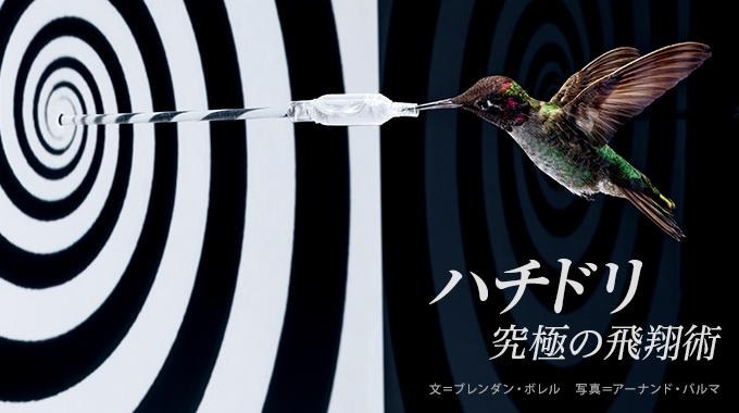 鳥のなかで最も小さな体をもち、肉眼でとらえきれない速さで飛び回るハチドリ。その高度な能力の秘密を解き明かそうと、最新技術を使った研究が進んでいる。