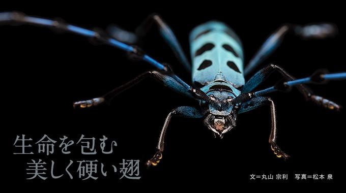 地球上の生物のなかで、最も大きなグループである甲虫。知られている種は、全世界で約38万、日本で1万を数える。その多様さを生んだ秘密が、体を包む美しく硬い翅だ。