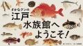 さかなクンの江戸水族館