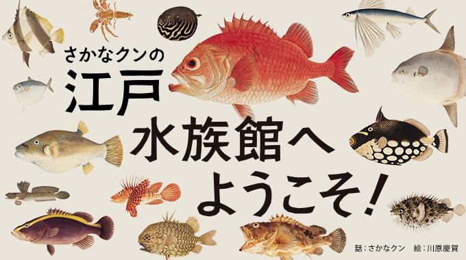 オランダの博物館に、ある日本人が江戸後期に描いた魚などの絵が300点以上も残されている。作者は「シーボルトの絵師」とも呼ばれる川原慶賀。さかなクンと一緒に、慶賀の海の中をのぞいてみよう。