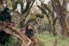 1985年に殺害されるまでの約20年間、ダイアン・フォッシーはゴリラ研究に打ち込んだ。写真のココとパッカーをはじめ、何頭かのゴリラと強い絆で結ばれた。