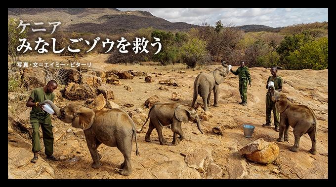 親や群れからはぐれた幼いゾウたちを救おうと、ケニア北部の先住民たちが力を合わせ始めている。