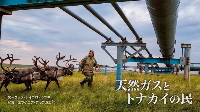 ロシアの極北地方で毎年、トナカイの遊牧を続けてきたネネツの人々。その伝統に、気候変動と天然ガス開発という壁が立ちはだかっている。