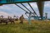 シベリアの遊牧民ネネツのニャドマ・フージが、天然ガスのパイプラインをトナカイと一緒にくぐる。ここはヤマル半島にあるボバネンコボ天然ガス田。最初の頃、トナカイはパイプラインを怖がったが、今は平気だ。北方の放牧地に行くには、ここを通らなければならない。