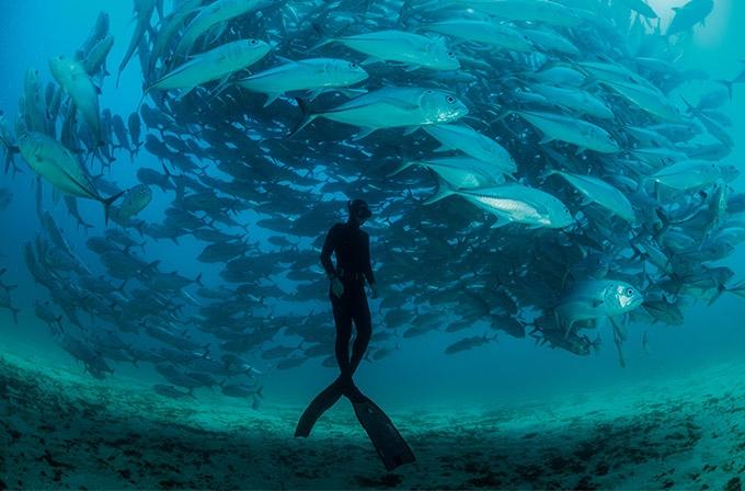 よみがえるメキシコの海