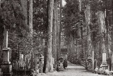 高野山の静寂を守る杉木立