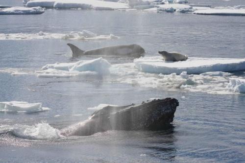 クジラ 食事