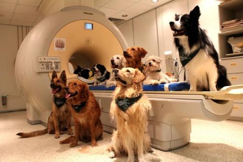 犬は飼い主の言葉を理解している 脳研究で判明 ナショナルジオ