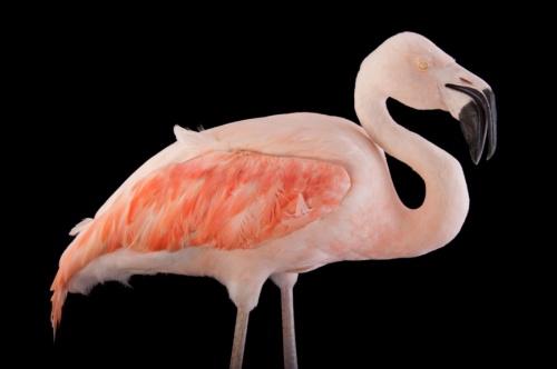 ヘンなくちばしをもつ鳥、写真12点ナショナルジオグラフィック日本版サイト