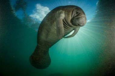 【ニュース】海の哺乳類に「農薬危機」か、同じ遺伝子が損傷