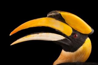 2018年を「鳥の年」宣言、鳥はなぜ大切なのか?