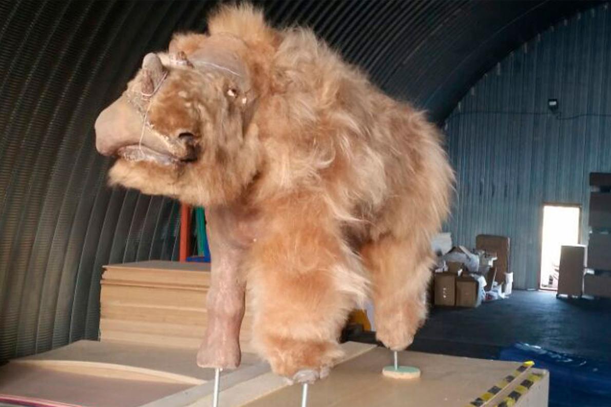 氷河期の絶滅サイを復元、毛むくじゃら、シベリア
