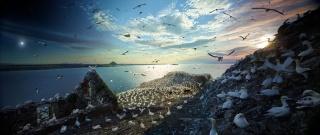 鳥はなぜ消えるのか、研究進む「渡り」