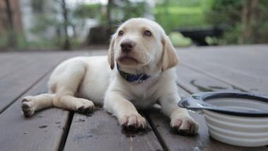 【ニュース】犬の「身ぶり」は19種、組合せで別の意味も、研究