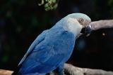 この10年で8種の鳥が絶滅か、評価の見直しを勧告