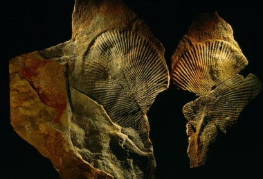 【ニュース】謎の古代生物の正体は「動物」と判明、地球最古級