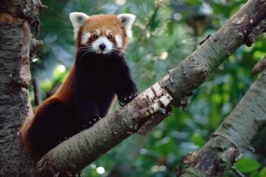 【ニュース】哺乳類の多様性、回復に数百万年、今の大量絶滅で