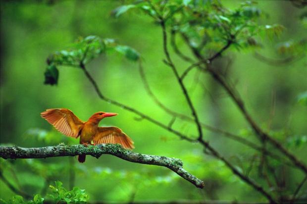 千歳川、野鳥に近づけるカフェをつくった理由