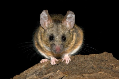 【ニュース】超音波でしゃべるネズミの会話、スロー再生で解読