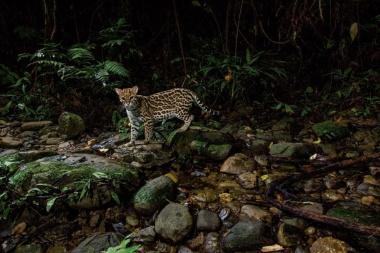 【ニュース】いざ、ジャングル探検へ!ペルー・アマゾン