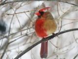 右半身がオス、左半身がメスの鳥が見つかる