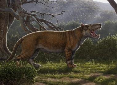 【ニュース】太古の「百獣の王」、新種の絶滅哺乳類を発見