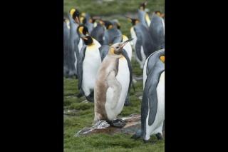 レアな色のペンギンとオットセイを同時に発見