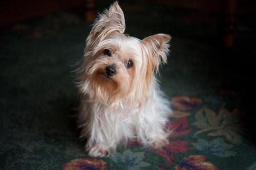 犬は雑音の中でも自分の名前を聞き取れる 新研究 ナショナルジオ