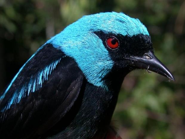 コーヒー農園で鳥が危ない、大規模調査で明らかに