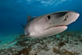 サメの赤ちゃんが「陸の小鳥」を常食、研究