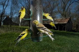 野生動物に餌やりはダメ、でも野鳥は例外? 研究