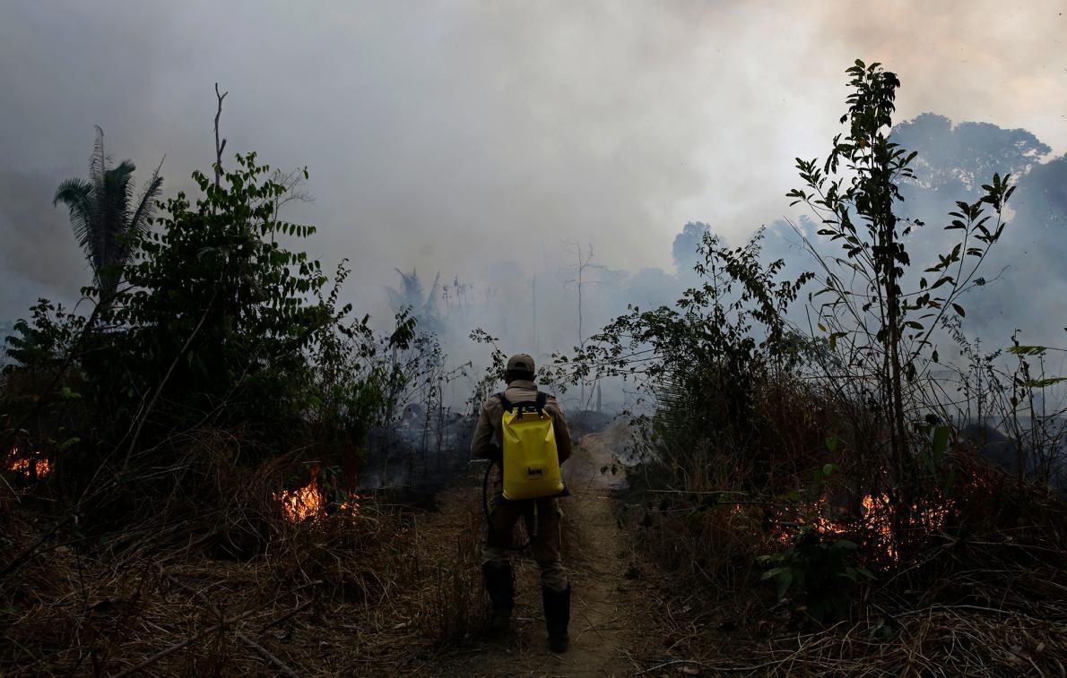アマゾン森林火災、実態は「伐採規制前への逆行」