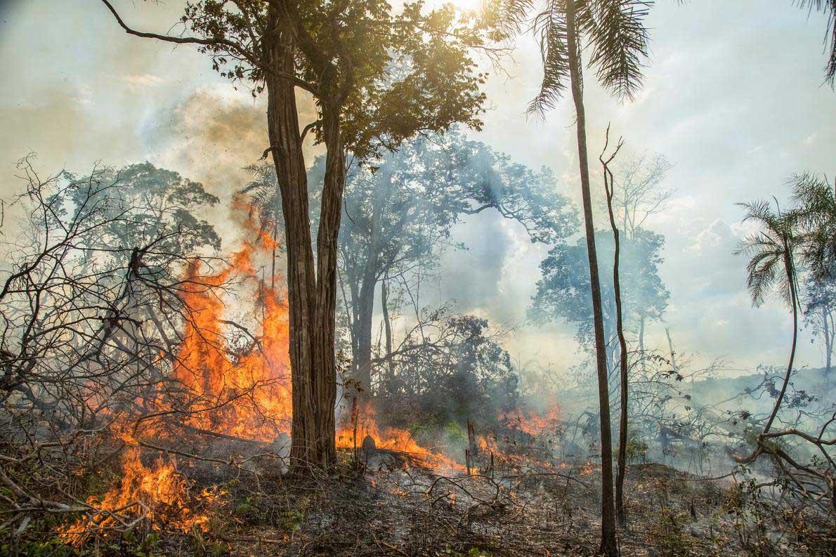 先住民も長年アマゾンを焼いてきた、今との違いは