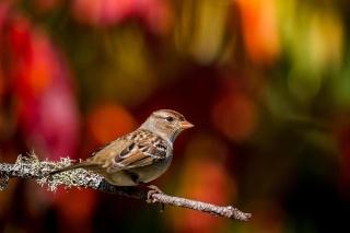 殺虫剤で渡り鳥が「遅延」、激減と関連か、北米