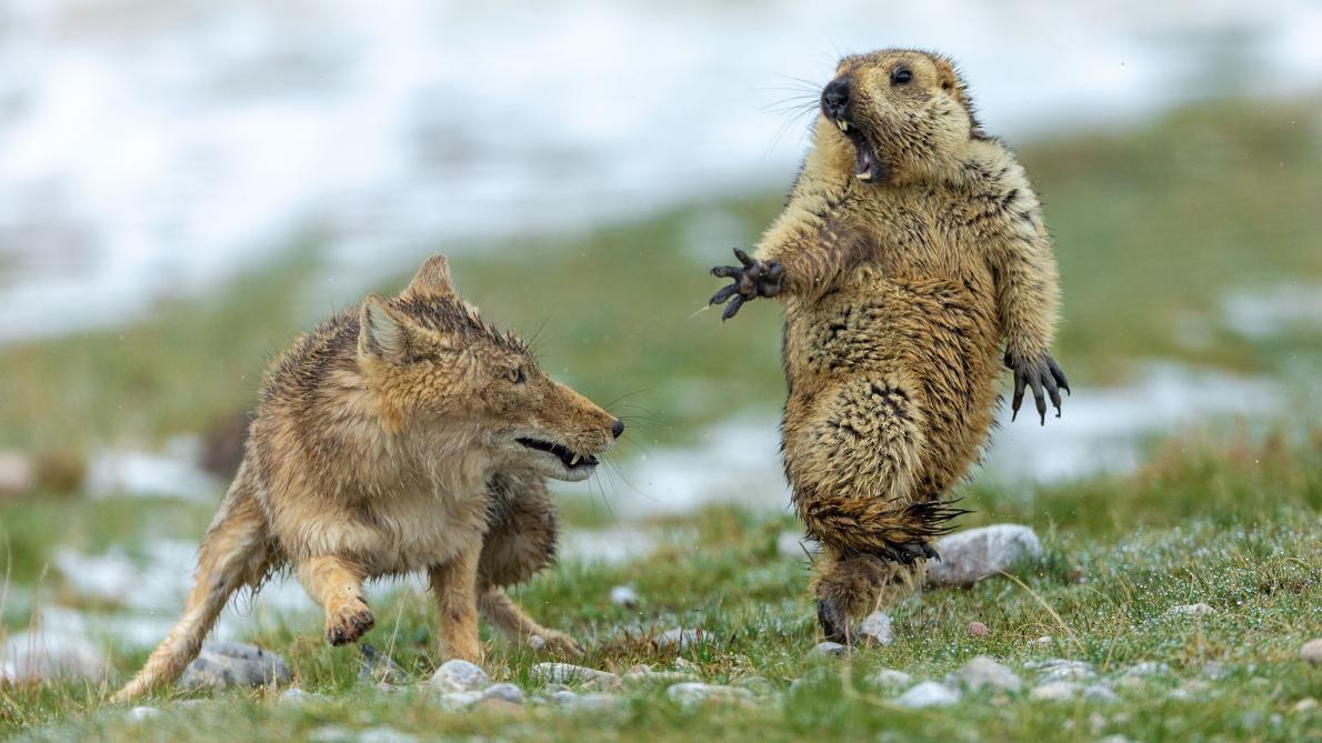 最高峰の野生生物写真コンテスト、驚く受賞作15点