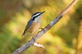 他の鳥の警報リツイート 余計な噂は拡散せず、研究
