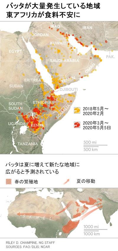 バッタ 大量 発生 2020 地図