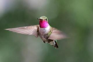 想像もつかない、ハチドリに見える自然の色の世界 最新研究