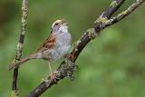 鳥の「新曲」が拡散、驚きのスピードが判明、研究