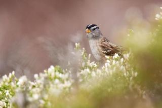 """コロナ禍の""""沈黙の春""""に鳥の美声が回復、研究"""