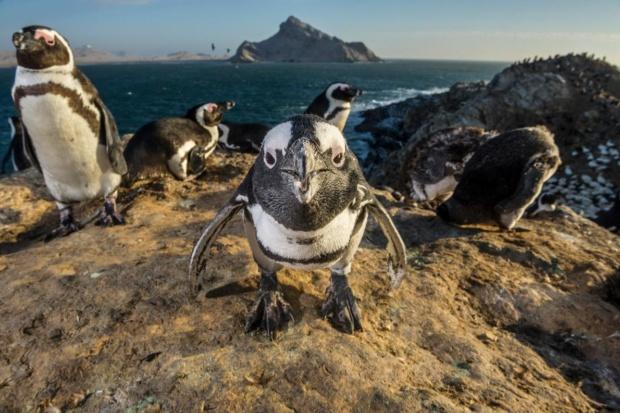かわいいだけじゃない ペンギンのすごい能力