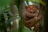 まるで異世界、フィリピンの特別な希少動物4選