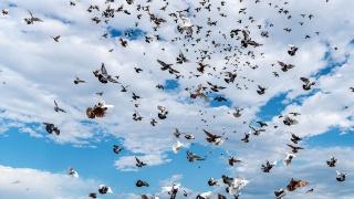 世界に鳥は何羽いる? 種ごとの推定から求めた初の研究結果