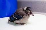 鳥が謎の大量死、まれに見る規模、米東海岸で進行中