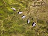 草原の迷路