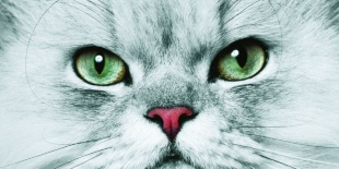 まなざし 見つめるネコ