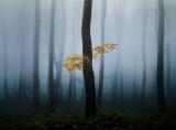 霧に包まれる森と黄葉