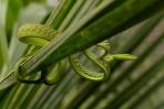 ヘビのカムフラージュ