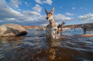 【Photo Stories】米国を大移動する動物たち、危険な道のりと保護策 写真11点